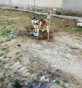 Домашние животные и зоотовары в Будённовске - купить недорогие корма ... dd4f6ab090cdf