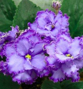 Доставка цветов цветы воронеж мелкий опт томск живые цветы