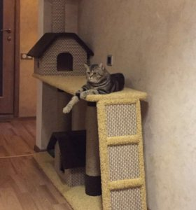 Домик для кошки когтеточка своими руками фото 84