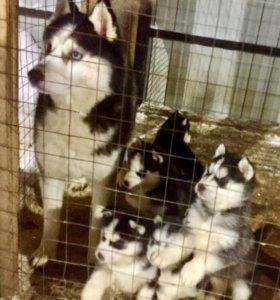 Домашние животные и зоотовары в Боровичах - купить недорогие корма и ... 45263104a2be2