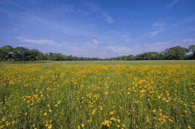 Скачать песню зелёный цвет у наших трав некошеных