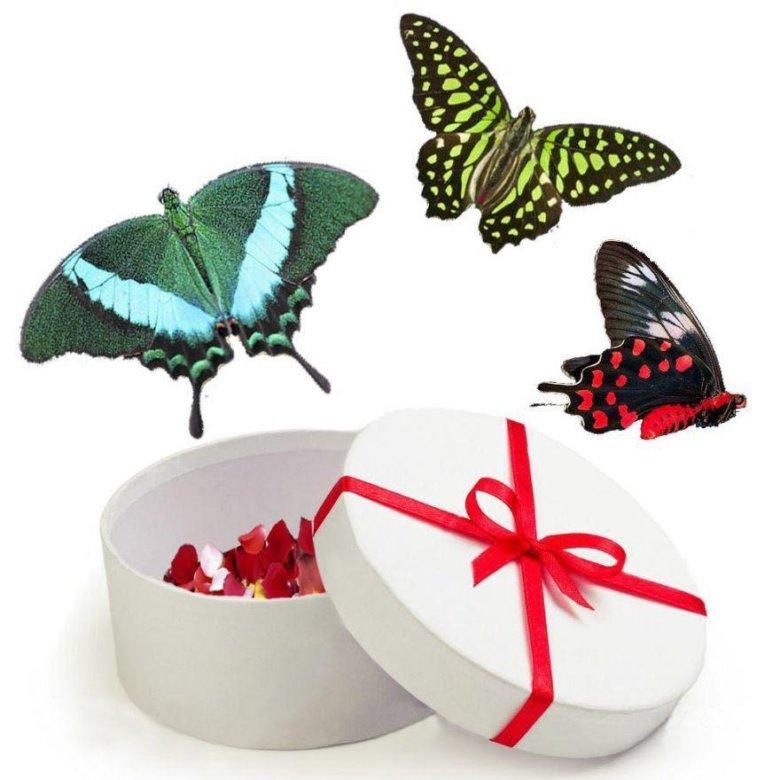 Бабочки как подарок 17