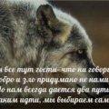 Ирина Ч.