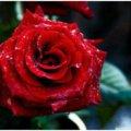 Роза 🌞.