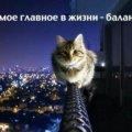 Любовь В.