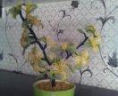 Цветы из бисера и нитей