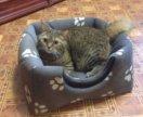 Лежанка домик для кота или собачки