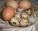 Яйцо домашние куриное перепелиное