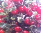Рассада перцев, томатов и другая