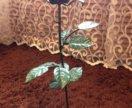 Красивая кованная роза