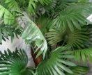 Искусственная пальма 🌴