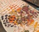 Ракушки для аквариума и поделок конус веер
