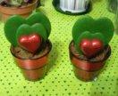 Хойя Керри ,двойное зеленое сердечко
