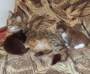 Котята, в добрые руки
