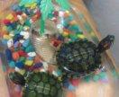 Красноухие черепахи! 🐢