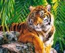 🎨 картина по номерам тигр