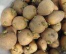 Семенной картофель 50кг