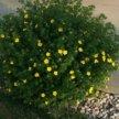 Цветы, саженцы
