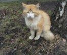 Прекрасный рыжий котик