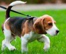 Погуляю с вашей собакой.