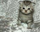 Бронирование котят