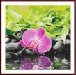 Раскраска по номерам орхидея