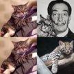 Котенок в добрые руки, котик в дар ищет дом Кумал