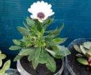 Цветы:алоэ, денежное дерево, каланхоэ, герань и др