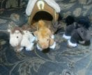 Gulliver домик с 3 лошадками