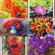 Картины по номерам.цветы