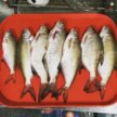 Астраханская рыба