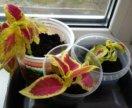 Цветы.отростки комнатных растений