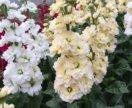 Цветы астрамерии, эустомы и маттиола