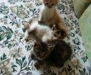 Котятки в добрые руки, девочки.