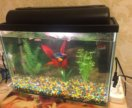 Аквариум с рыбками на 20 литров
