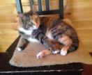 Кошка в добрые руки, кошечка в дар Эсма