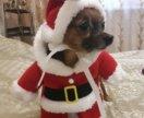 Два прикольных костюма  Санта Клауса и тыквы