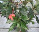 Цветок домашний