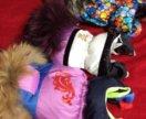 Шью одежду для собак .