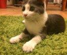 Стёпа-ласковый и нежный котик