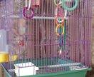 Б/у клетка для попугая в идеальном состоянии