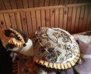 Черепаха- подушка- игрушка