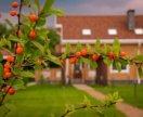 Услуги по посадке,уходу, обрезке плодовых деревьев