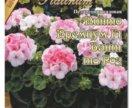 Пеларгония, цветет (Герань) 3 шт