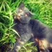 Вязка с ярким и интересным котом!