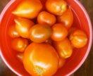 Помидоры с куста перцы