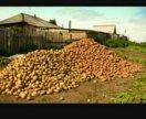 Картофель свежий домашний с Ленинск