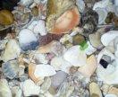 Даром! Ракушки и камушки