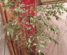 Комнатные растения в офис