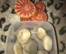 Камень, островок для черепах